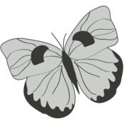 Girly Realistic Butterflies 13 Thumbnail